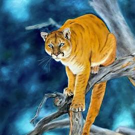 On the Prowl by Dr Pat Gehr