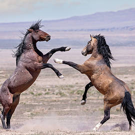 Onaqui Stallions by Wes and Dotty Weber