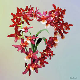 Orchid - Oncostele Hilo Firecracker 'New Year' by Susan Savad