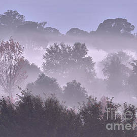 One Cold Morning Near Trentham by Neil Maclachlan