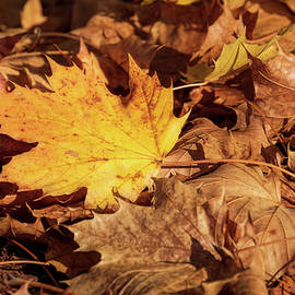 One Leaf Among Many by Catherine Avilez