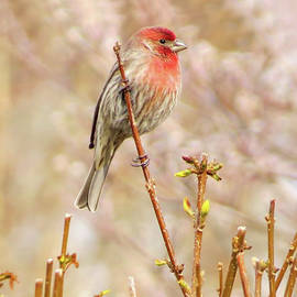 One Spring Morning by Linda Bielko