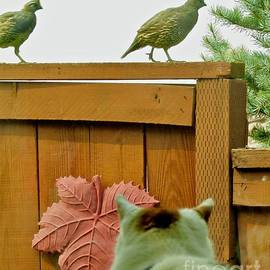 Oops The Quail are Coming by Phyllis Kaltenbach