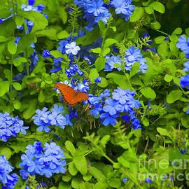 Orange and Blue by Craig Wood