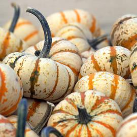 Orange and White Gourds by Joseph Skompski