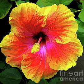 Orange and Yellow Hibiscus Macro Abstract Acrylic Effect by Rose Santuci-Sofranko