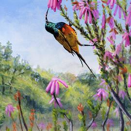 Orange-breasted Sunbird by Christopher Reid