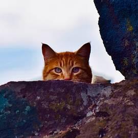 Orange Cat by Dana Hardy