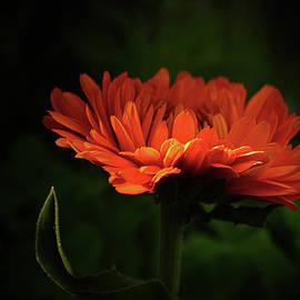 Orange by Dorothy Pinder