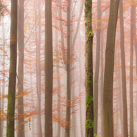 Orange Fog by Alexander Kunz