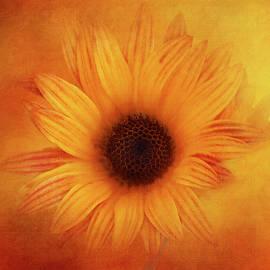 Orange Garden Daisy by Terry Davis