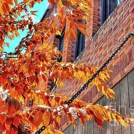 Orange On Orange by Beautiful Oregon