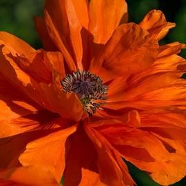Orange Party by Terri Waselchuk