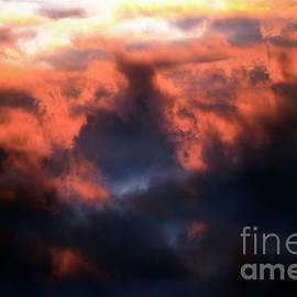 Orange Passion by John Van Decker