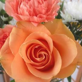 Orange Rose And Carnation by Paul - Phyllis Stuart
