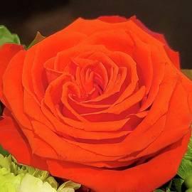 Orange Rose Goddess by Charlotte Gray