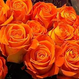 Orange Roses For you by Charlotte Gray