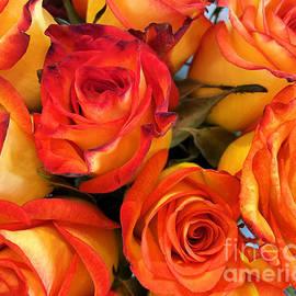 Orange roses  by Janice Drew