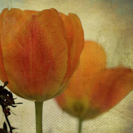Orange Tulips with Texture by Patti Deters
