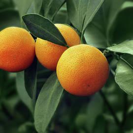 Oranges - No 2 by Nikolyn McDonald