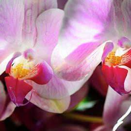 Orchid #45 by Stephen E Morton