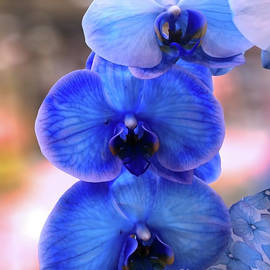 Orchid Beauty #1 by Jasna Dragun
