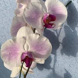 Orchid Beauty by Karen Nicholson