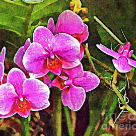 Orchid Dew by Mindy Newman