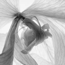 Orchid Interpretation