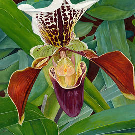 Lady Slipper Orchid by Melvyn Kahan