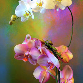 Orchid Splash by Christina Ford