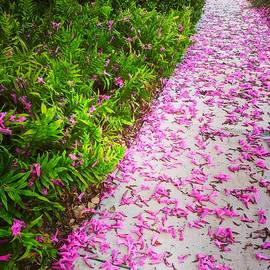 Orchid Tree Petals by Vicki Dreher
