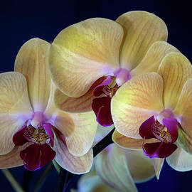 Orchids 1 by Dimitry Papkov