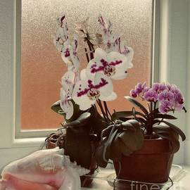 Orchids and Conch Shell - 2, 2020 by Phyllis Kaltenbach