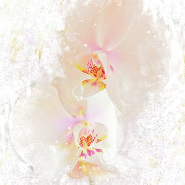 Orchids by Andy i Za