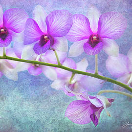 Orchids Art Decor by George Moore