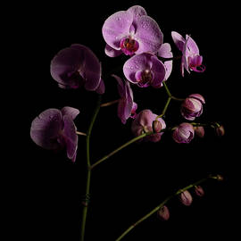 Orchids coming out of the darkness by Amber Photography