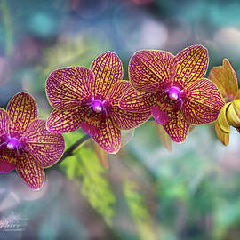 Orchids In Art by George Moore