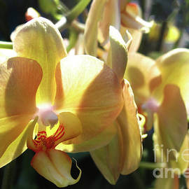 Orchids of Bright Yellow by Ruth Jolly