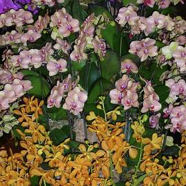 Orchids, Orchids and More Orchids by Barbie Corbett-Newmin