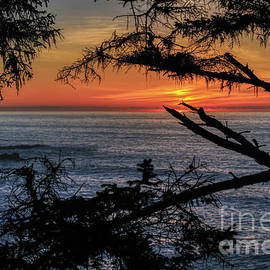 Oregon Coast Sunset In Branches by Michele Hancock