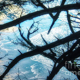 Oregon Ocean And Branches Abstract by Michele Hancock Photography