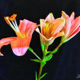 Oriental Pink Beauty  by Barbara Zahno