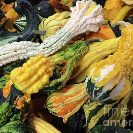 Ornamental Gourds by Lois Bryan