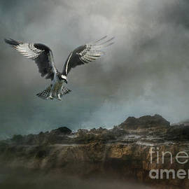Osprey Landing by Kelley Freel-Ebner