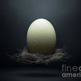 Ostrich egg in a nest floating by Etienne Outram