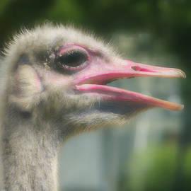 Ostrich Eyes by Kathi Isserman