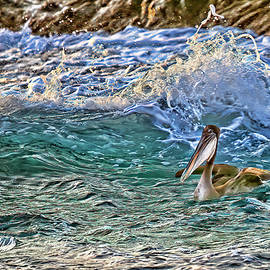 Out For A Morning Swim by Marcia Colelli