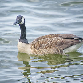 Out For A Swim by Linda Goodman