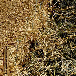 Out with the old and in with the new - English Master Thatcher replaces rotting moss-covered thatch by Terence Kerr